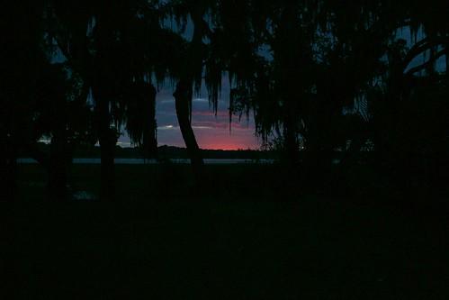sunrise river palms beaufort