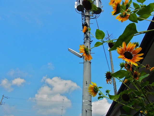 真夏の黄色と真昼の青