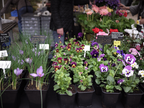 Bloomsbury Farmers Market-2