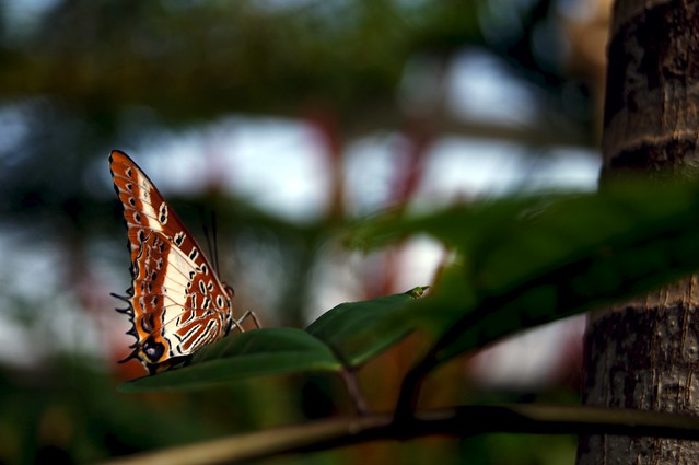 February Butterfly