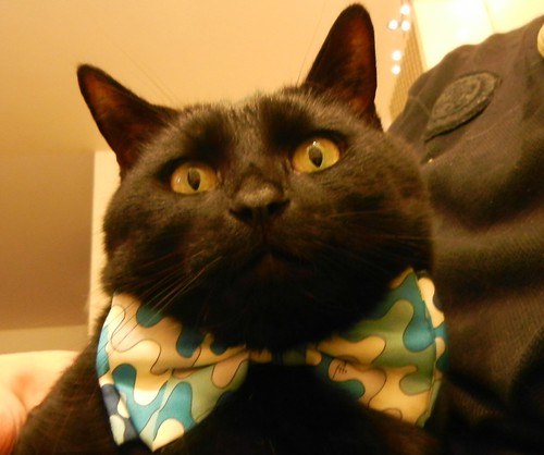 Does this bowtie make me look fat?
