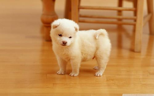 cute_puppy_2-wallpaper-1920x1200 by puchitzel