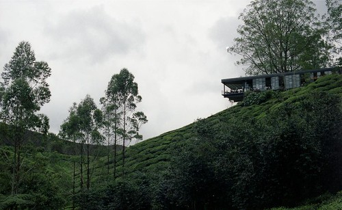 Cameron Highlands 2012 - BOH Tea Gardens (12)