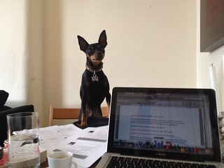 #Caffeinated essay writing. Angus getting jealous of laptop!