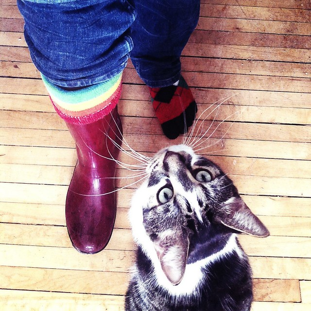 boot and cat