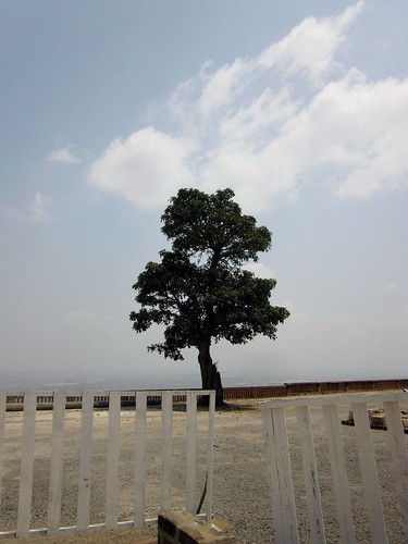 The Tree of Loneliness