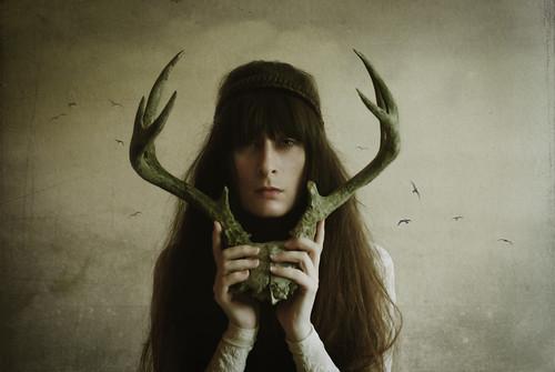 american deer by Lady Miss Elle
