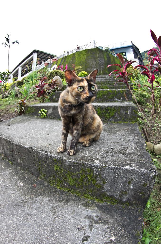 貓寫真 侯硐
