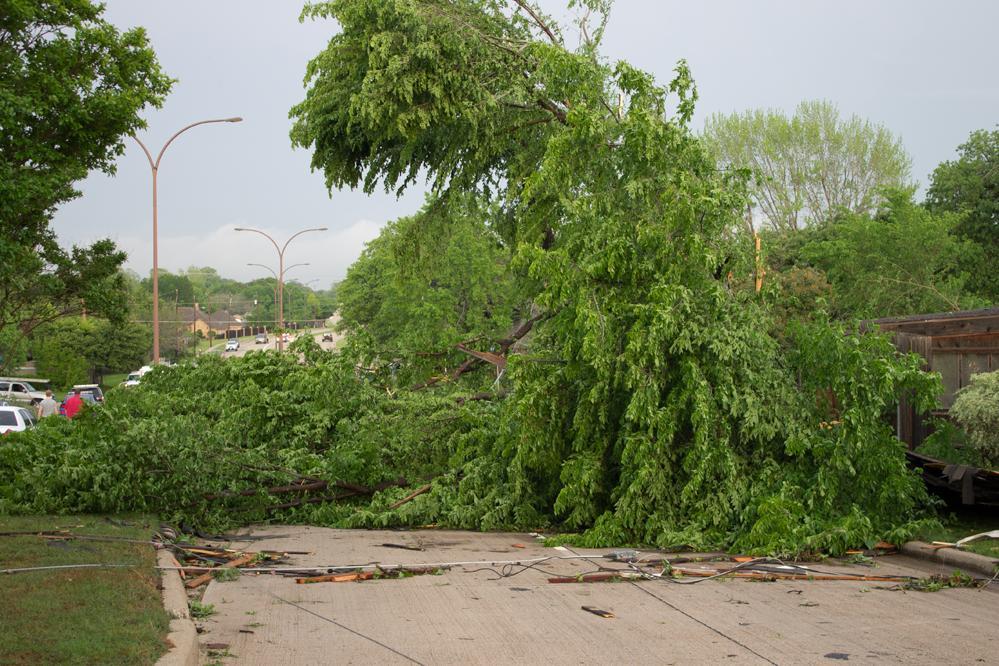 Bardin Tree Block A