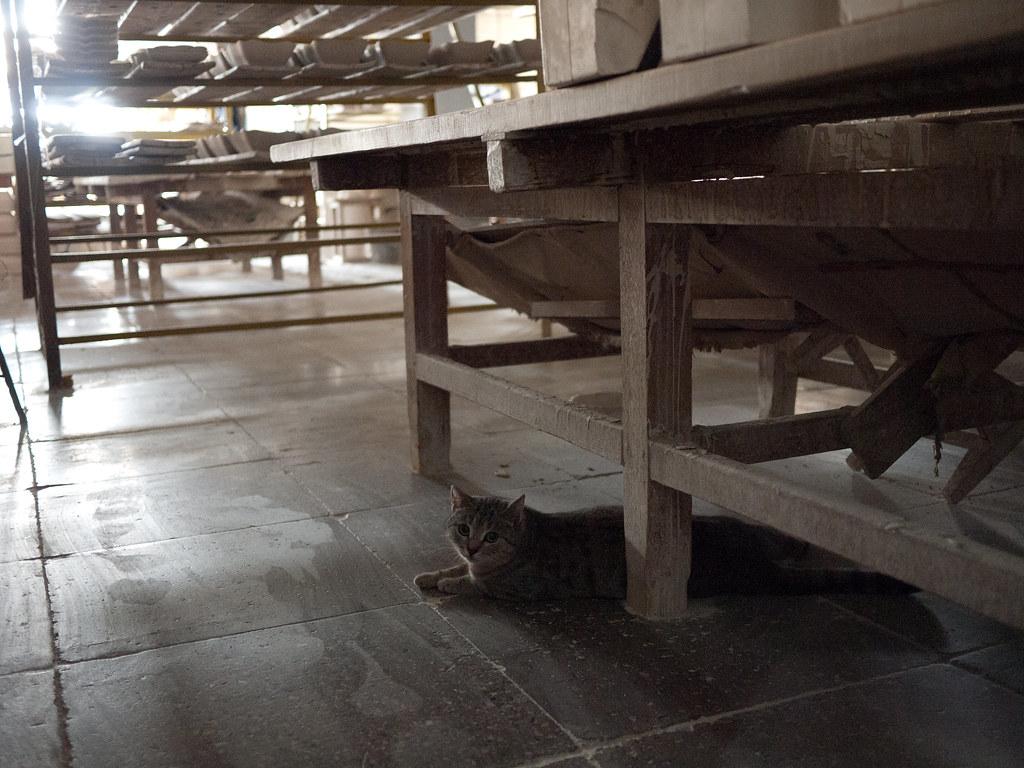 A cat at Verbilki Porcelain Factory