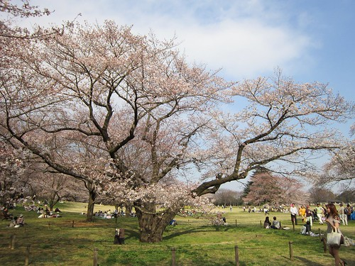 桜@桜の園 2012年4月9日 by Poran111