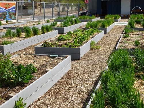 elementary classroom raised bed plots