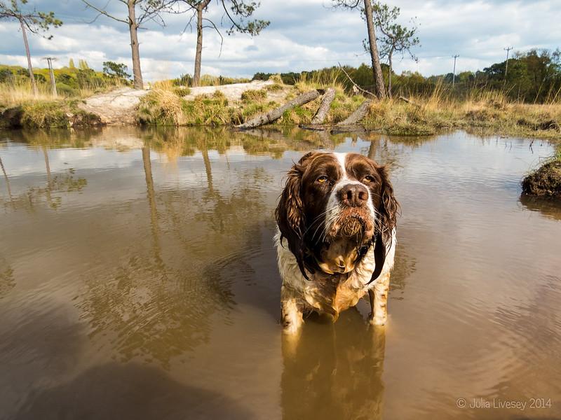 Pond Dog