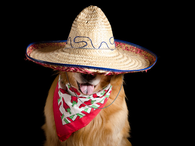 Dog and Sombrero