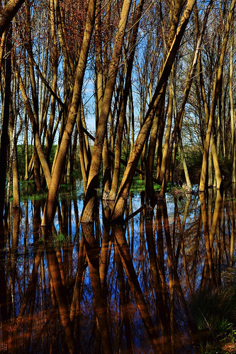 Dark reflections, Wetland, Campos branch, The Canal of Castile, Valladolid, Spain