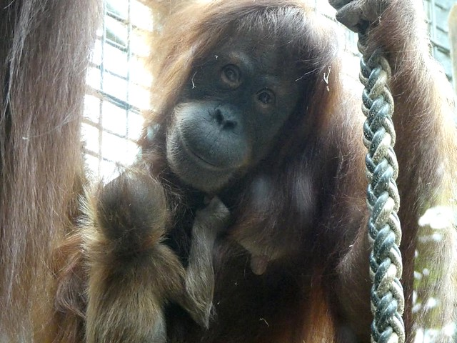 Mutter Sari und Berani, Zoo Heidelberg