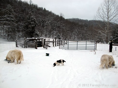 Snowy day at the sheep barn 4 - FarmgirlFare.com