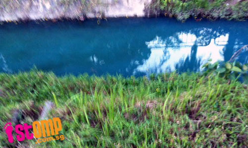 S'pore getting more polluted? Discharge turns Mountbatten drain bright blue