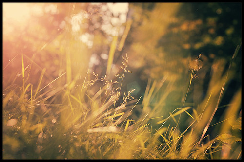 sun nature grass spring flare