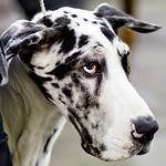 100 Dog Strangers: 02/2012