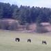 ponies 2 foxcote