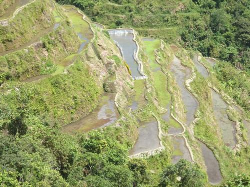 Luzon-Banaue (35)