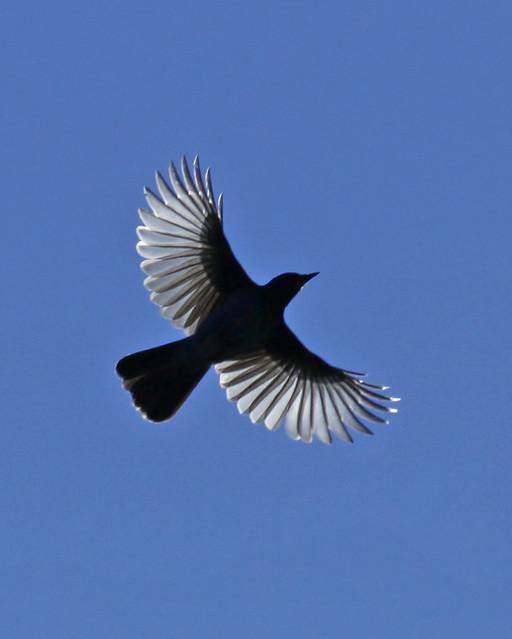 Jay Flight | Flickr - ... Jay Z