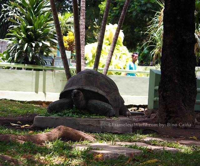 Galapagus Turtle