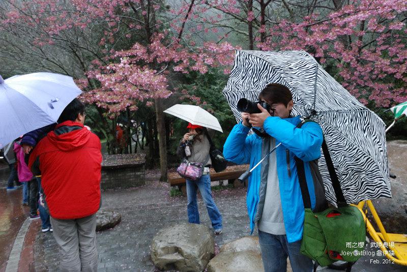 2012_0227_雨之櫻。武陵農場DSC_4277_04
