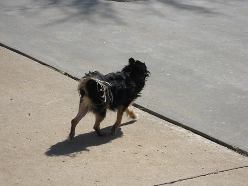 four legged strut
