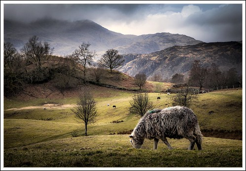 Essential Lakeland by AJ Scapes