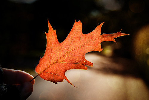 First Autumn Leaf s