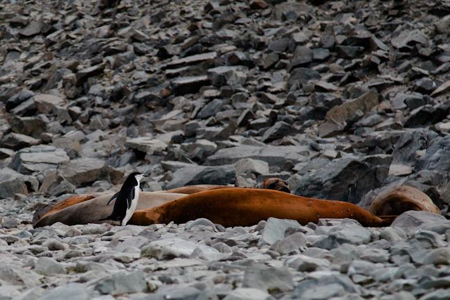 antarctica-blog-14