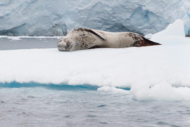 antarctica-blog-89
