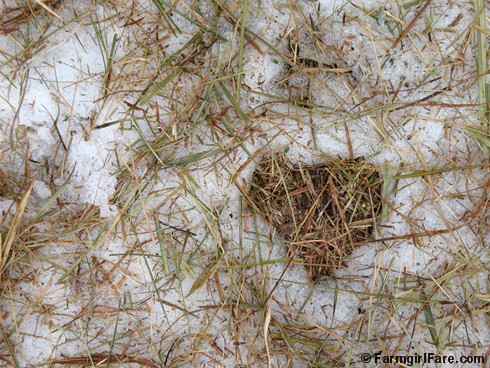 Hay covered heart in snow - FarmgirlFare.com