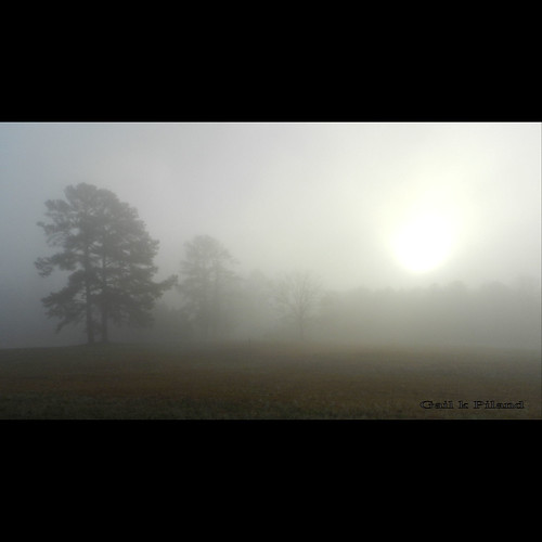 morning trees field landscape foggy shining vividimagination sooc photohraphy flickraward spiritofphotography nikonflickraward gailpiland crazygeniuses