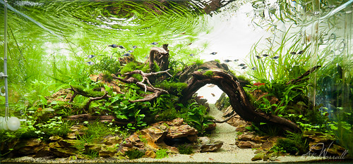 90x45x45cm planted dragon stone aquascape