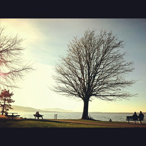 ocean travel trees light vacation people sunlight tree nature water bench landscape islands washington state branches horizon scene pacificnorthwest bellingham wa benches pnw 2012 iphone iphone4 iphoneography projectweather instagram instagramapp jeanamariephotography thegreatpnw dancelittlejean