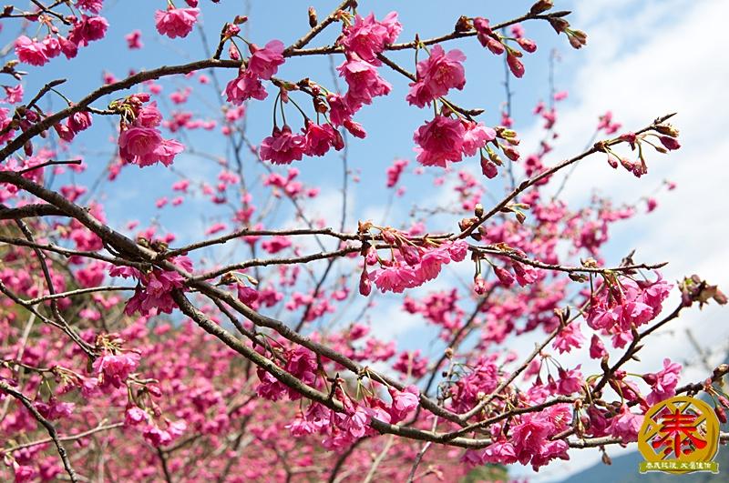 02.10-說好的櫻花呢!-3