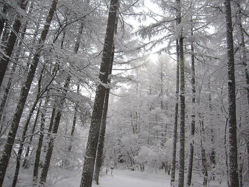 しとしと降る雪…2012.2.25 by Poran111