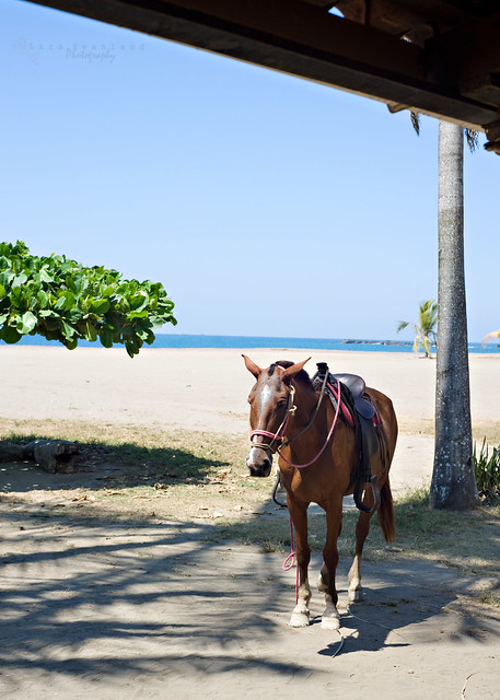 Horse Riding on the Beach Offered