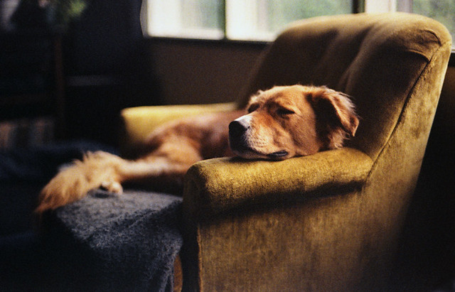 dreams of dogs, Nikon FM