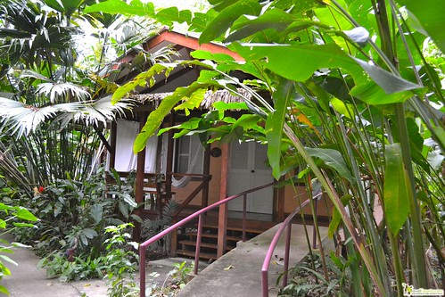 Jungle Lodge in Puerto Viejo, Costa Rica