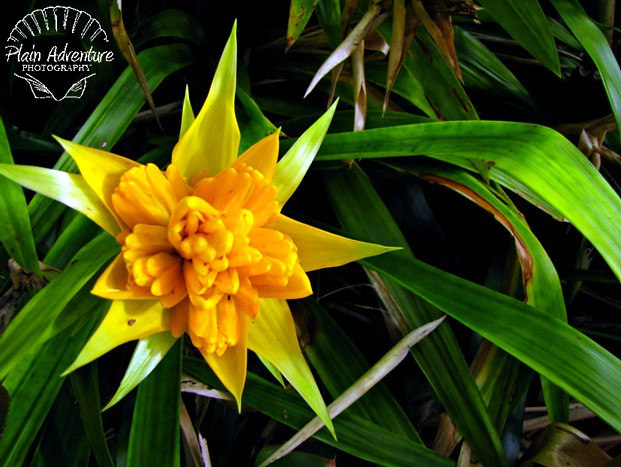 Yellow Tropical Flower