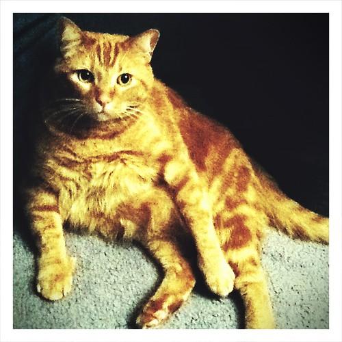 Ptw Cat