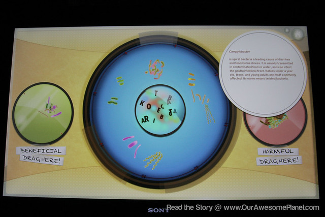The Mind Museum @ BGC-85.jpg