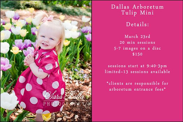 2012 Dallas Arboretum Tulip Mini