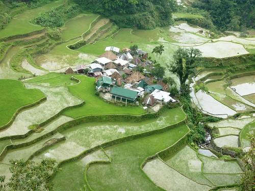 Luzon-Bangaan (107)