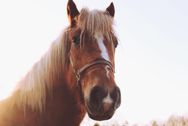 caballo handsome