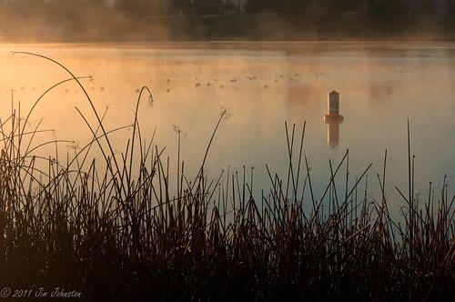 california lake unitedstates hdr coot bakersfield buoy centralcalifornia americancoot lakeming kernrivercampground